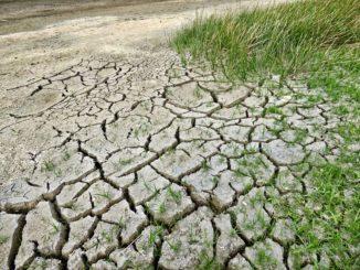 Internet, Fliegen, Fleisch: Worauf die Deutschen fürs Klima verzichten könnten – und worauf nicht
