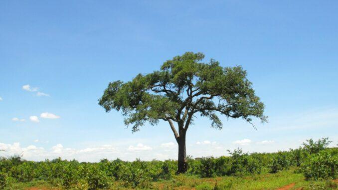 KI liefert wichtige Informationen über Afrikas Ökosysteme