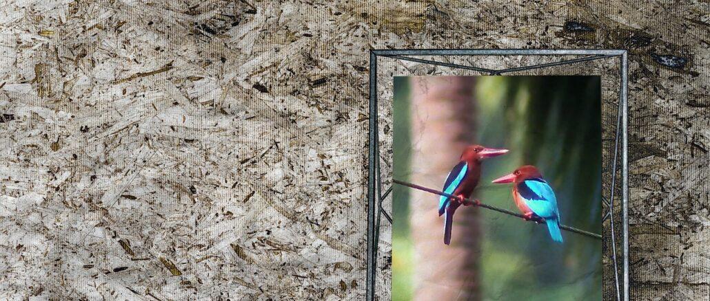 Digitaler Bilderrahmen - das sollten Sie wissen